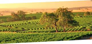 Barossa tours from Adelaide